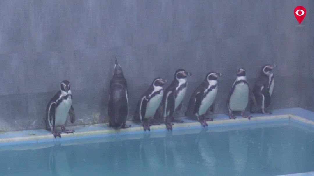 राणीबागेसह पेंग्विन दर्शन 50 रुपयांमध्येच!
