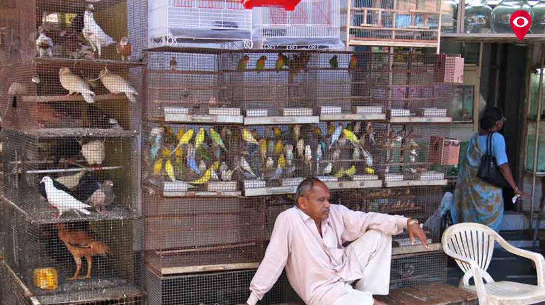 'मुंबईतील बेकायदेशीर पशु-पक्ष्यांची विक्री बंद करा'