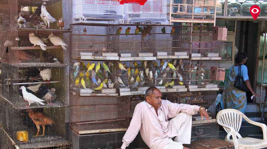 Bombay HC - Stop illegal selling of pets