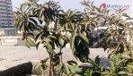 बीएमसी ने की सब्जी की खेती