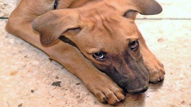रेल्वेच्या महिला डब्यात चढलेल्या कुत्र्याला आरपीएफकडून मारहाण