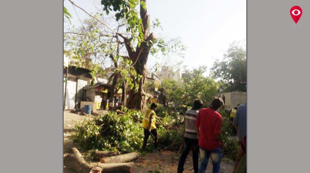 रास्ते का पता नहीं, हो रही पेड़ों की कटाई
