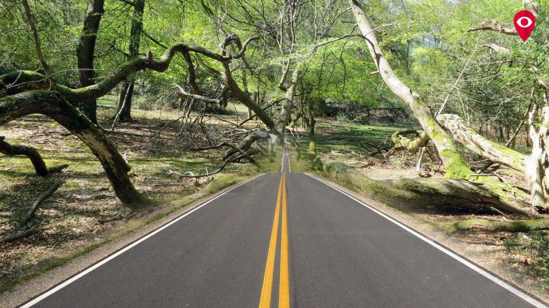 रस्ते रुंदीकरणाच्या नावाखाली झाडांचा बळी