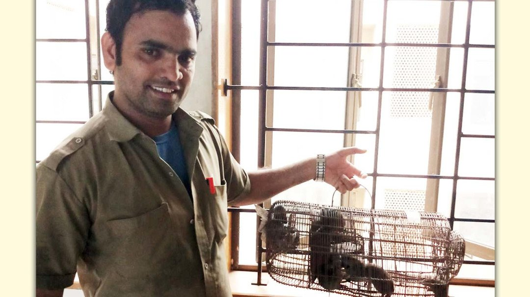 Shatabdi hospital lay trap for rats