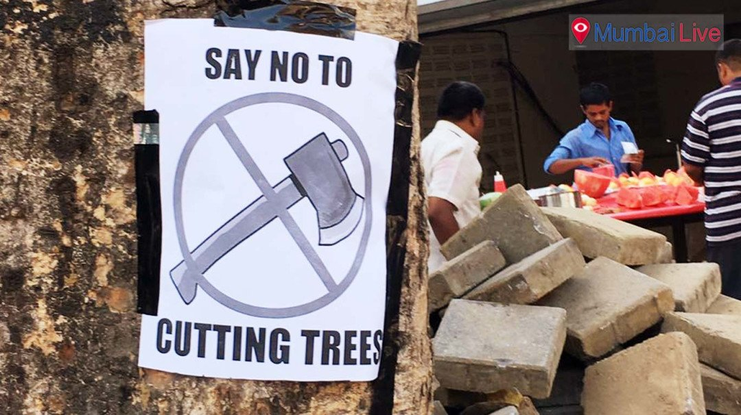 This Holi Mumbaikars spread awareness 'Save Tree'