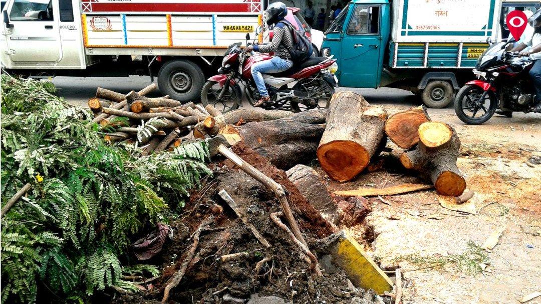 मुंबई, तुला झाडांवर भरवसा नाय काय? वर्षाला 31 कोटी खर्च, तरीही पडझड!