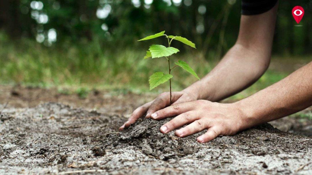 रमजानमध्ये बुऱ्हानी फाऊंडेशन लावणार 40 हजार झाडे!