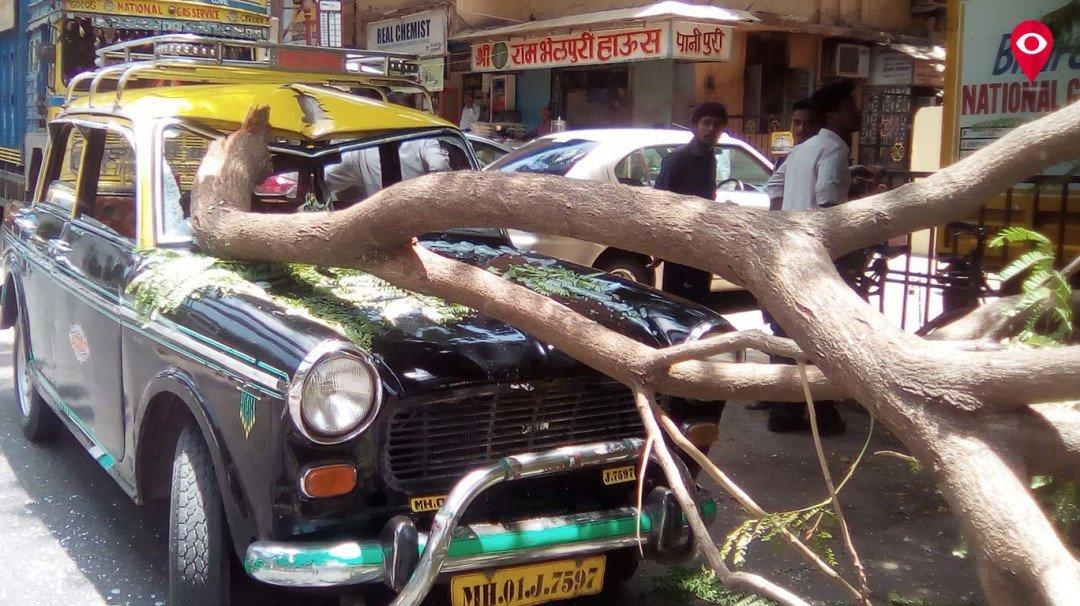 झाड पडून टॅक्सीचे नुकसान