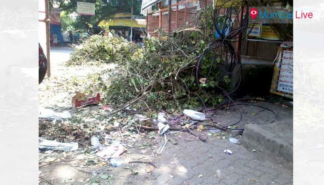 Move the fallen tree away...