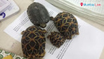 199 live turtles seized...