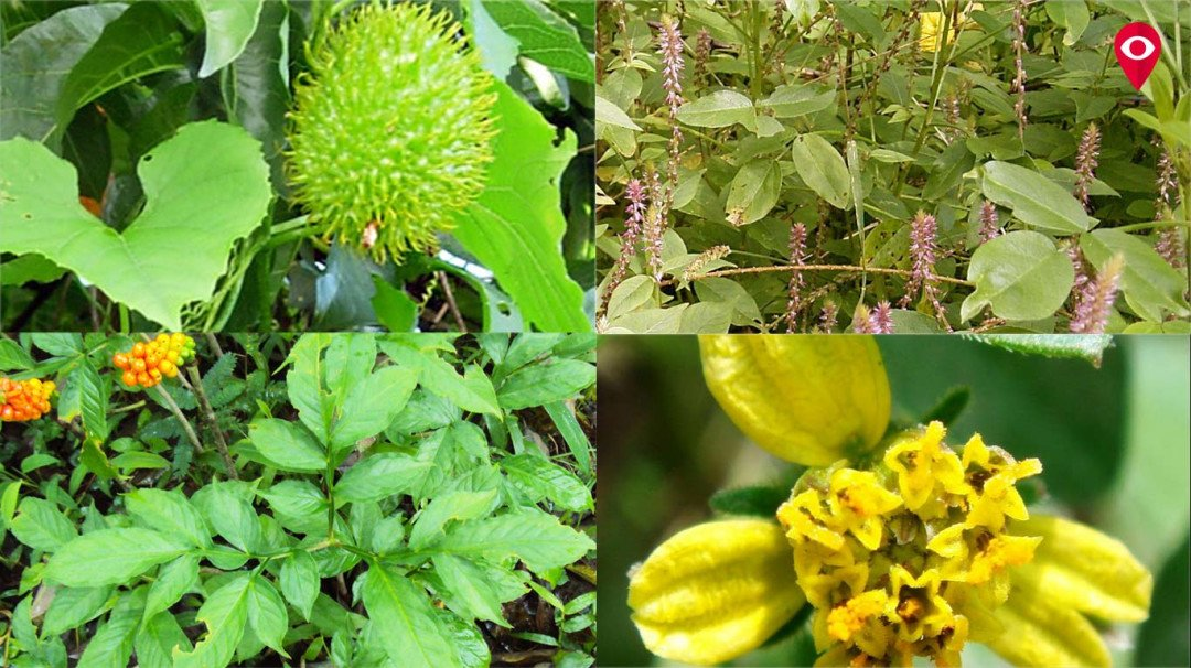 Go healthy this monsoon with these native veggies
