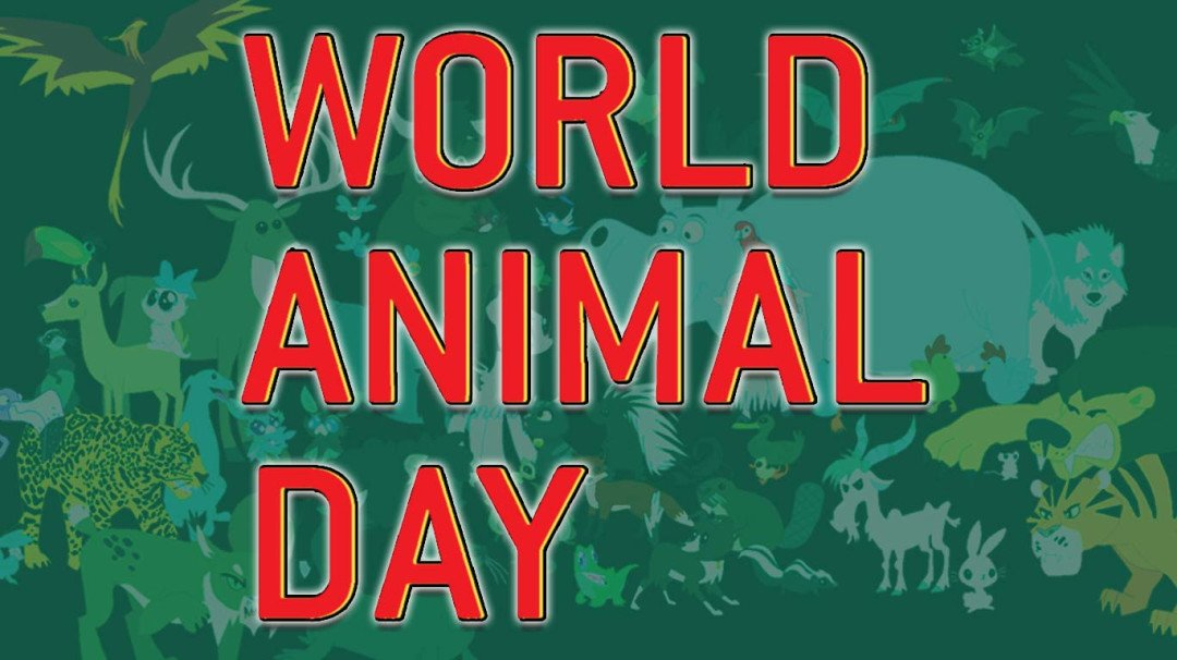 वर्ल्ड अॅनिमल डे - प्राण्यांचे 'हे' व्हिडिओ तुम्ही पहायलाच हवेत!
