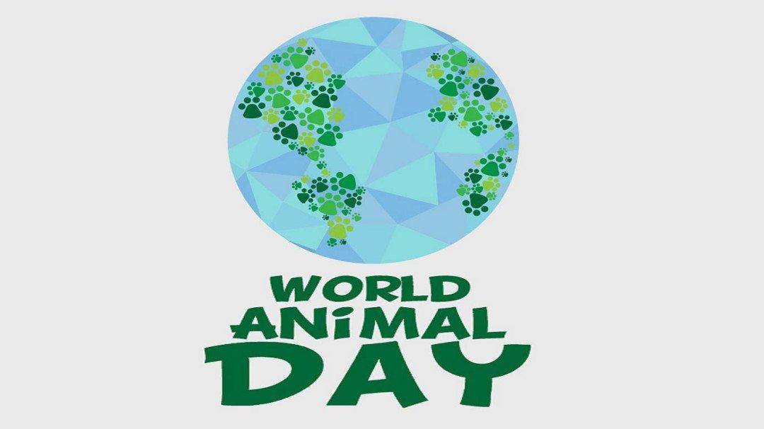 World Animal Day - जानवरो के ये वीडियो कर देगे आपको सोचने पर मजबूर !