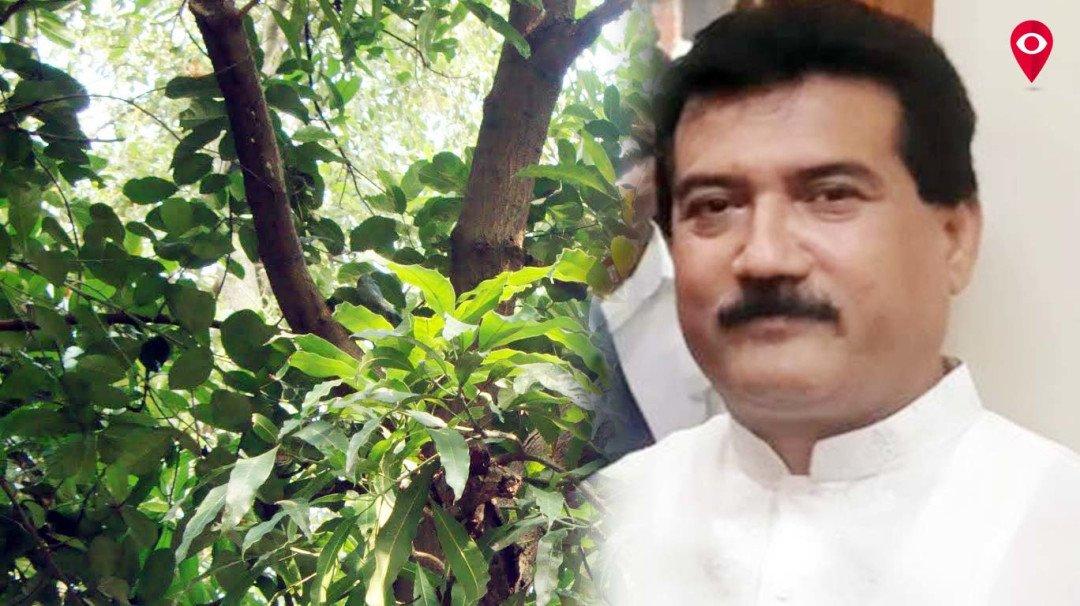 मुंबईच्या रस्त्यांवर परदेशी नकोत, भारतीय झाडे लावा़ - सभागृहनेते