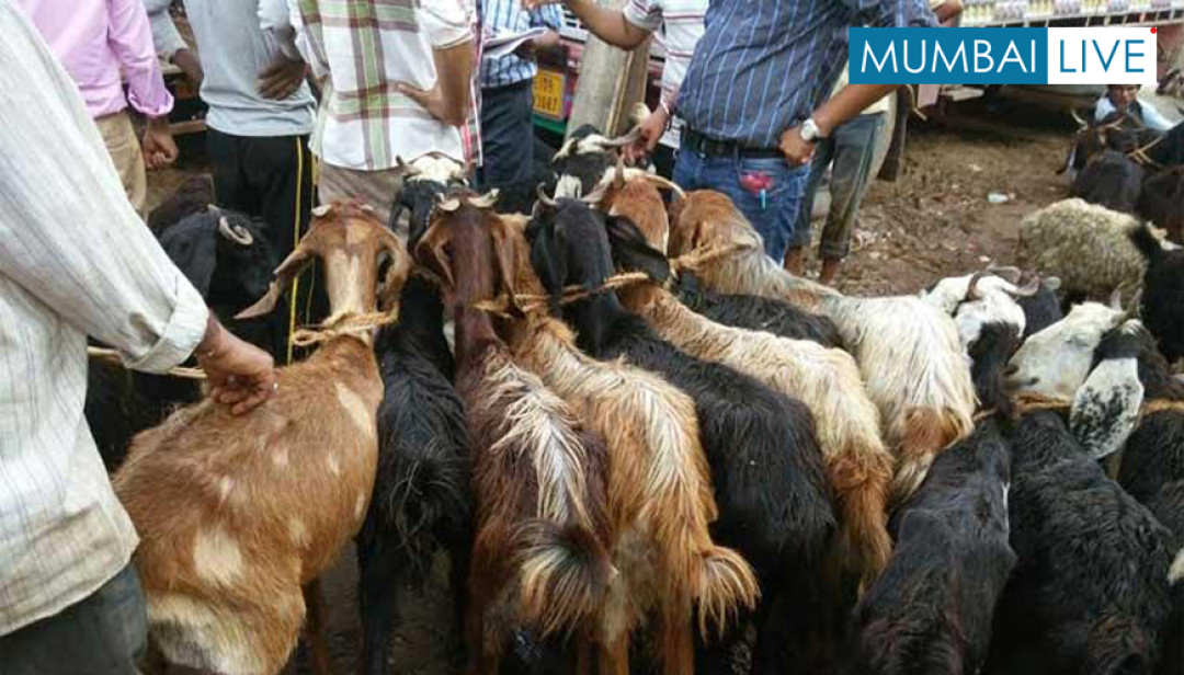 Slump in Goats' sale at Deonar