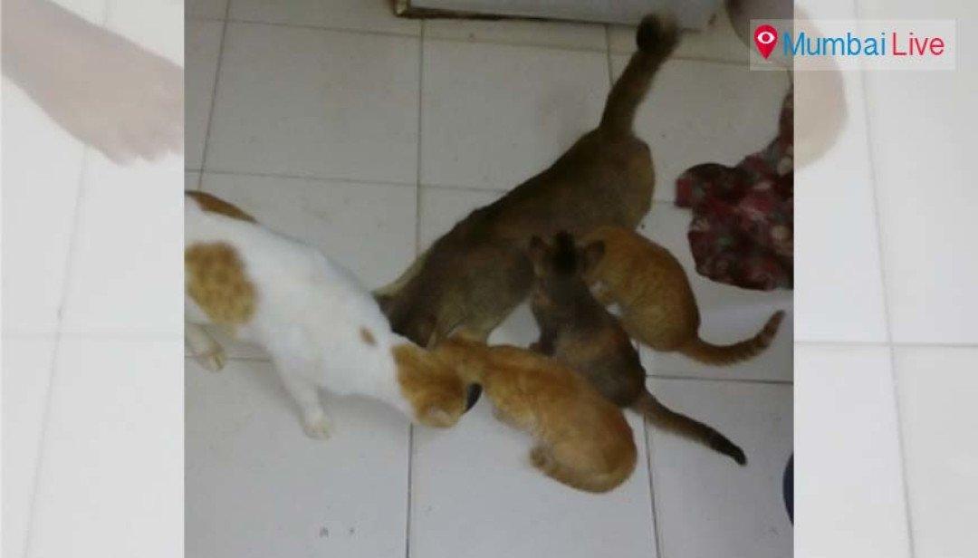 Me and My kitties