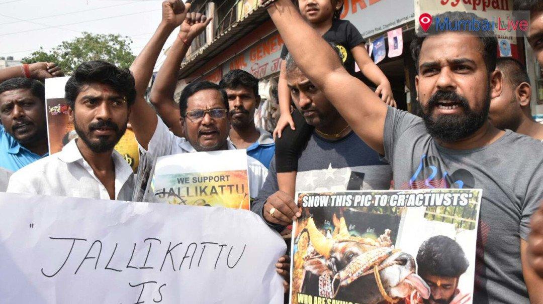 A Human Chain to protect Jallikattu