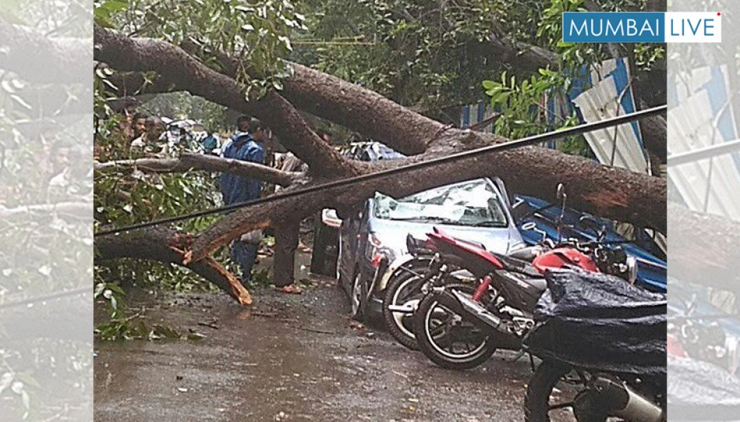 Fallen tree causes a stir in Chembur