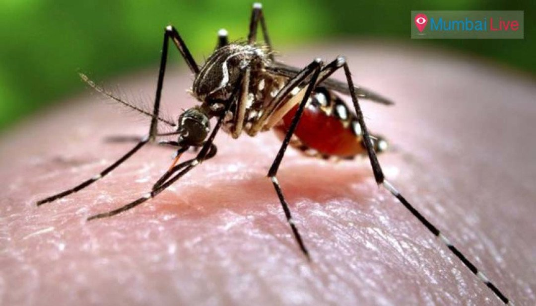 Dengue takes one more life