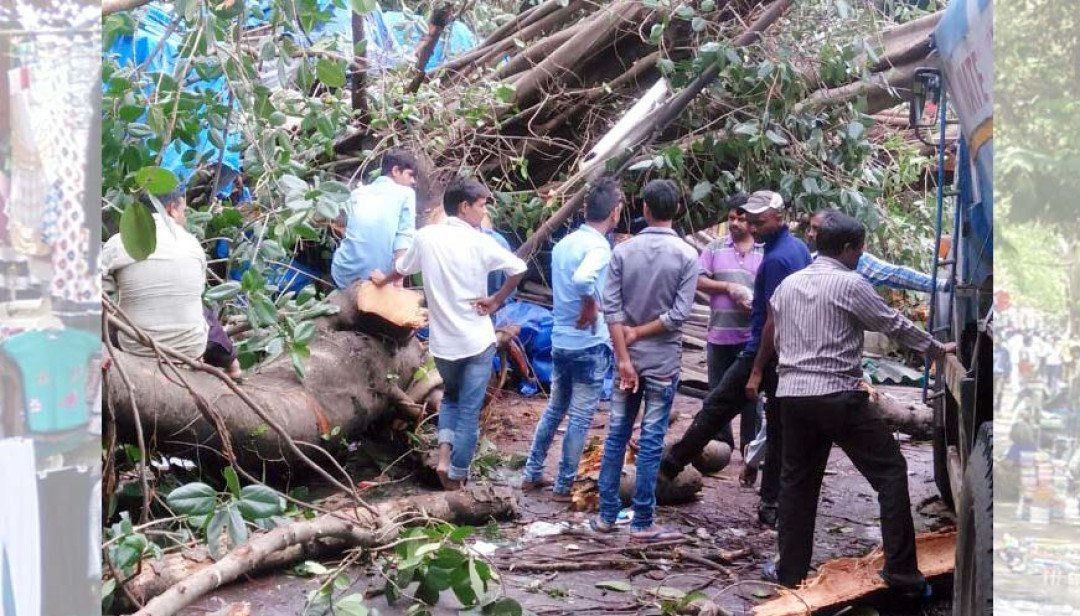 Tree damages 10 shops injure one