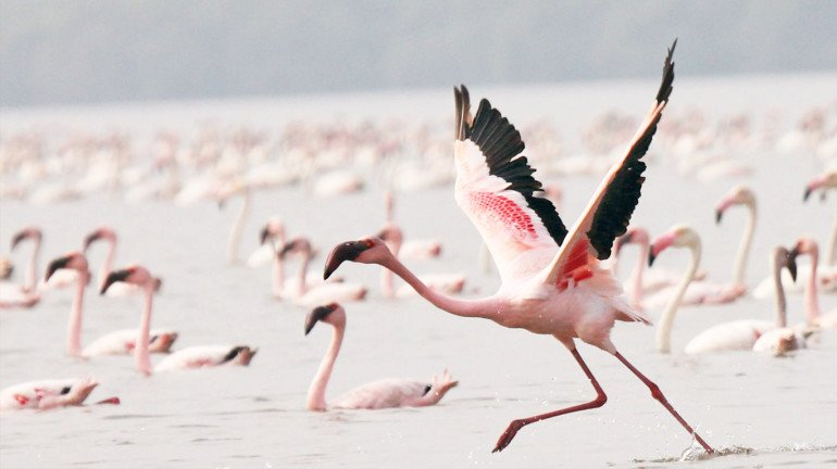 The first flamingo sanctuary in Thane to start from February 1