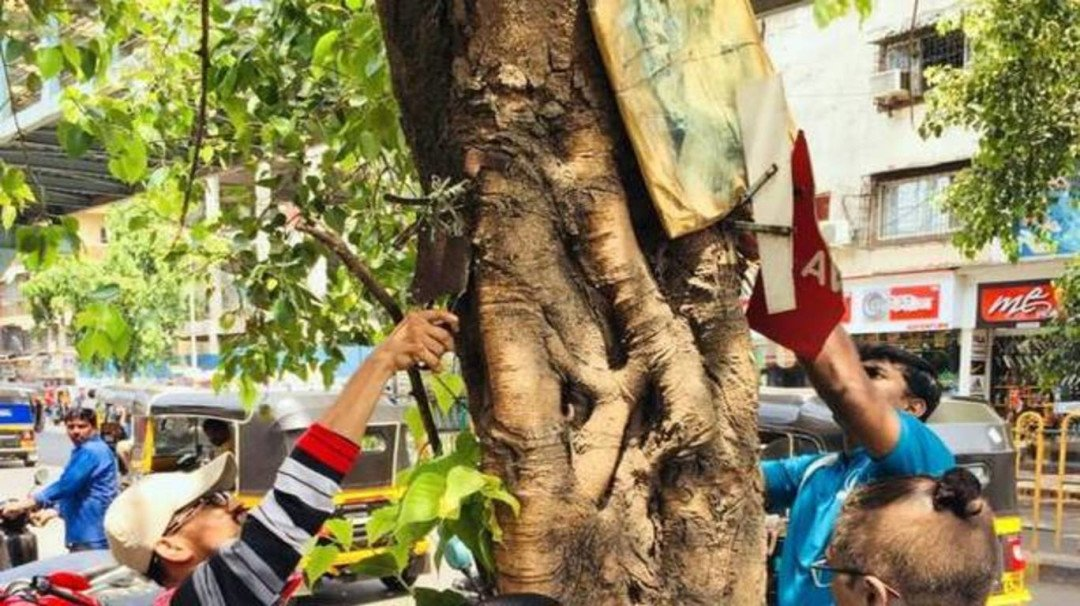 World Environment Day: When the youth join hands to free trees from pain