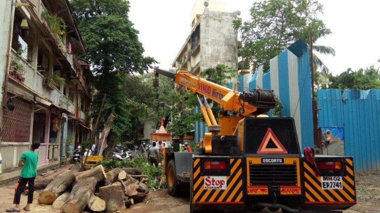 मुंबई में दिखा बारिश का कहर, पेड़ गिरने से एक की मौत