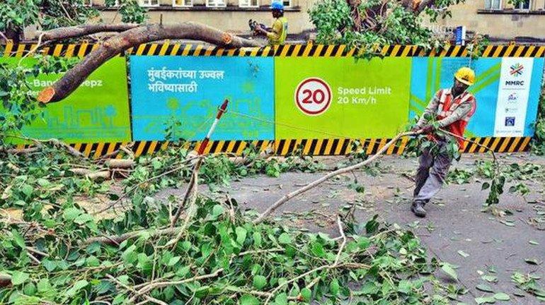 BMC initiates axing 199 trees for two road over-bridges in Mumbai