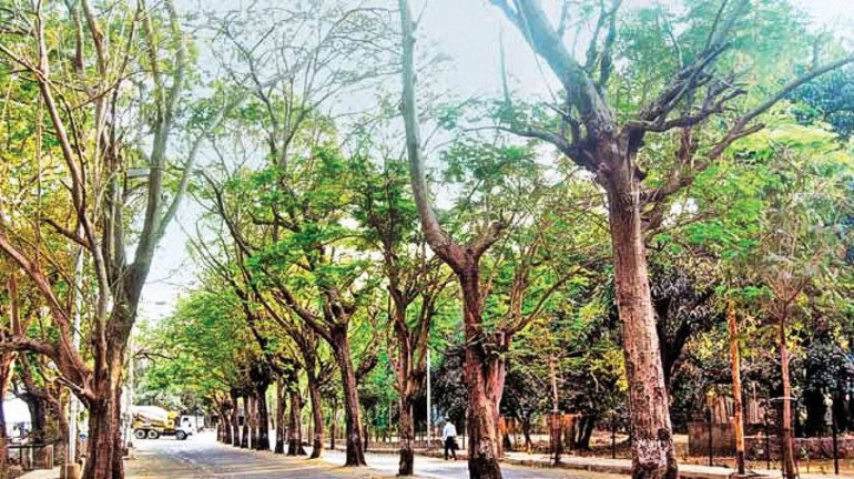 Government plans an inquiry committee to review tree plantation