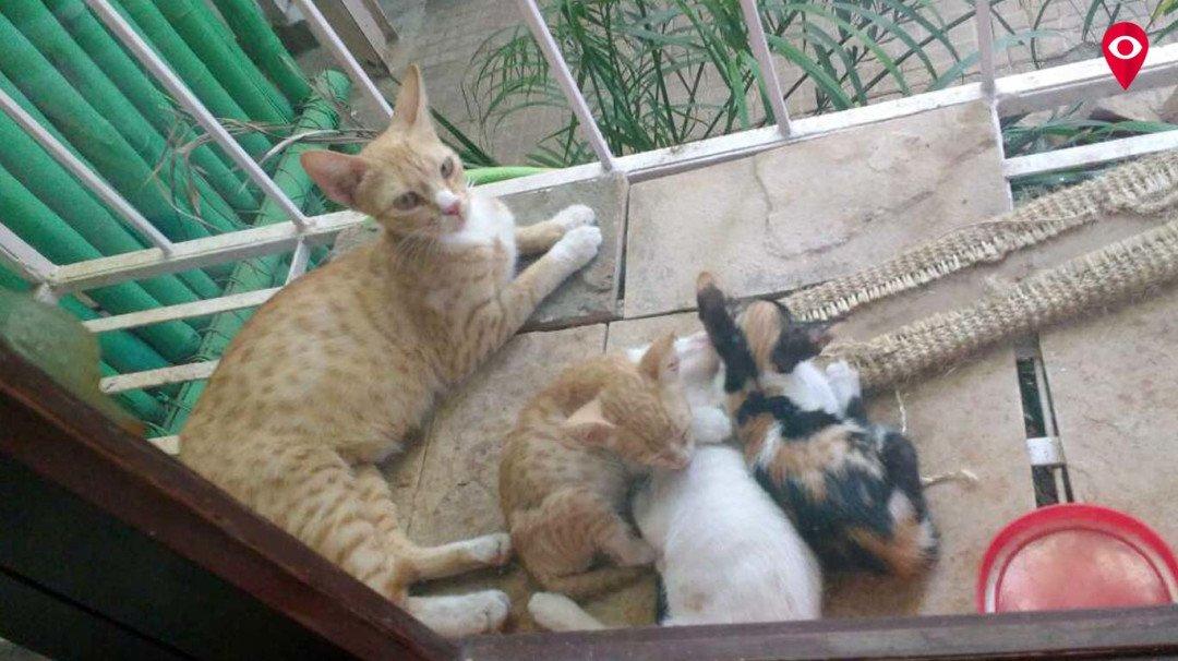 बिल्ली के बच्चे को मारने की वारदात सीसीटीवी में कैद