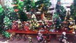 Market is set for Christmas!