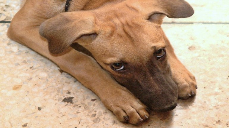 RPF, GRP officials beat up a dog for entering a local train