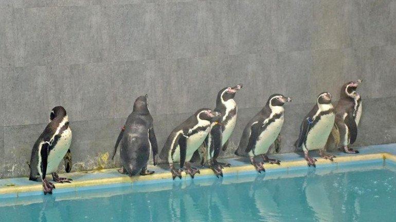 भायखळा प्राणीसंग्रहालयात २ पेंग्विन पिल्लांचा जन्म, 'ही' ठेवली नावं
