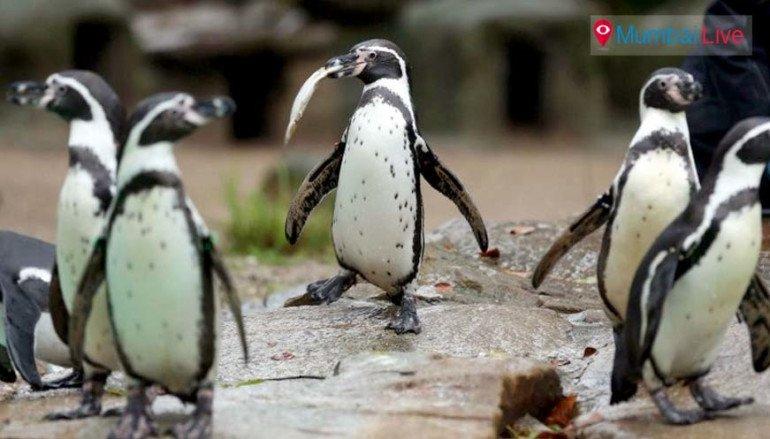 पेंग्विनायण सुरूच