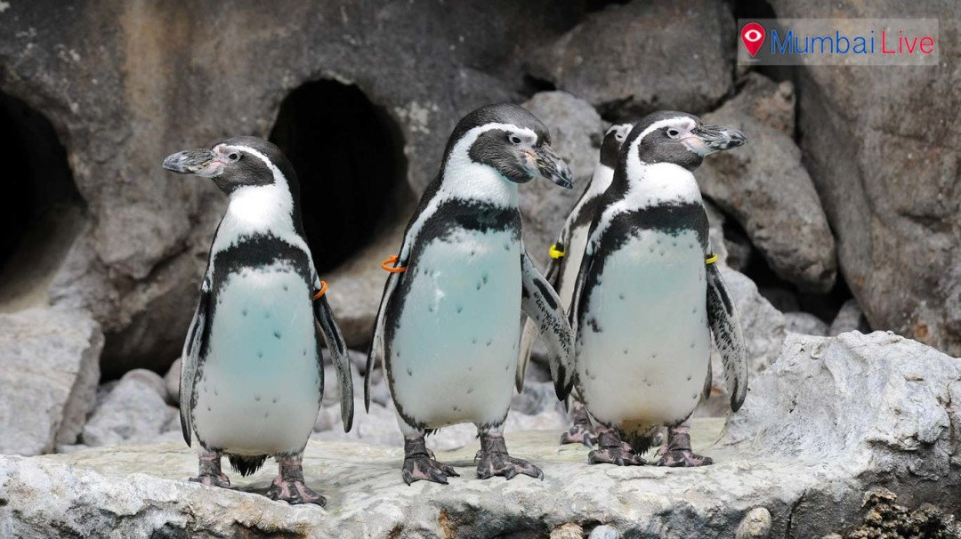 शंभरची नोट मोजा आता पेंग्विन पहायला