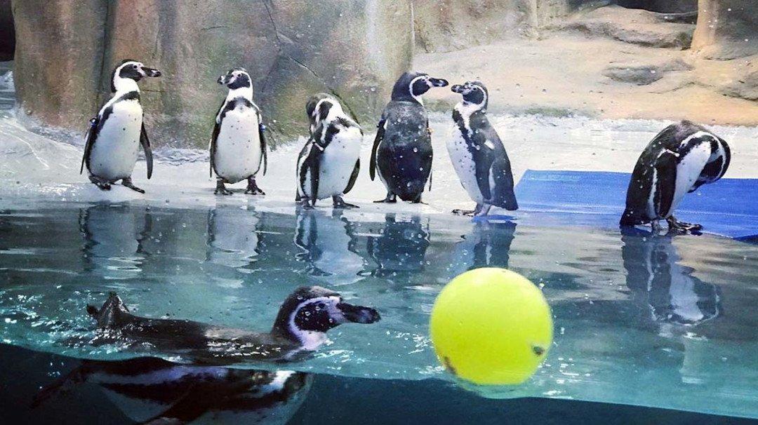 पेंग्विन के दीदार के लिए खर्च करने होंगे 100 सौ रुपए
