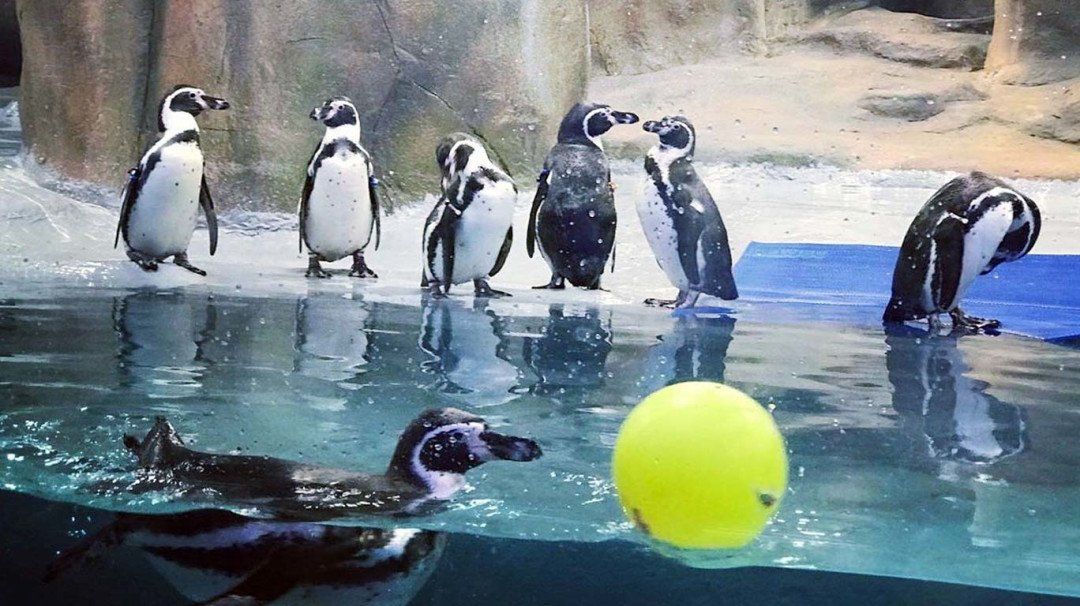 Mumbaikars shell out Rs 100 for penguin glimpse at Byculla zoo