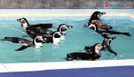 Now pay 10 times to see penguins