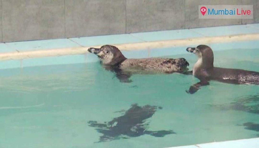 पेंग्विन मौत मामले में आयुक्त को नोटिस