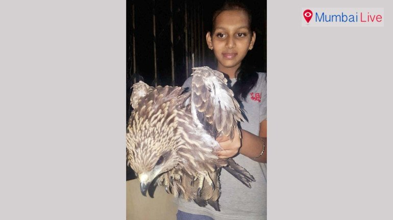 13-year-old, Shruti Chavan sets an example of humanity by saving an injured eagle