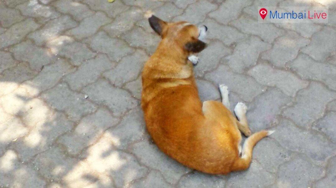 घाटकोपर में आवारा कुत्तों का आतंक