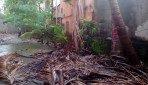 Trees menace at Mulund's MHADA Colony