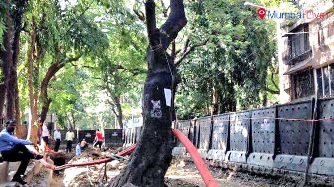 पेड़ लगाओ,जीवन बचाओ