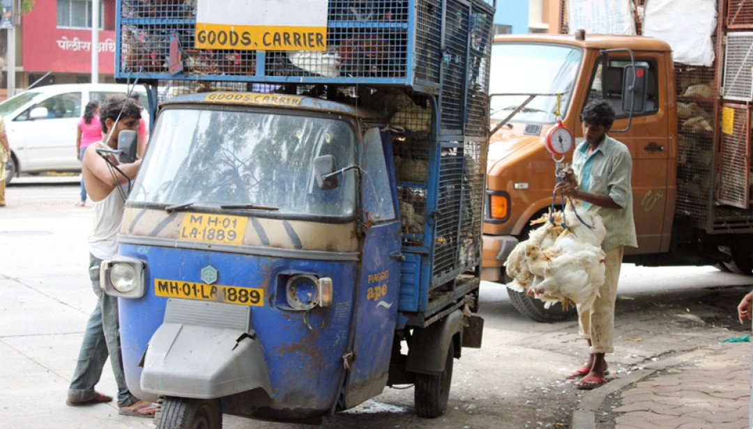 Wadala residents stressed by stinky Poultry vans